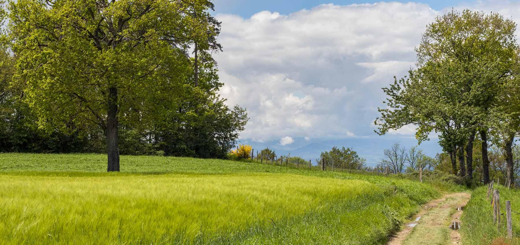 Opter pour des vacances en camping à la ferme en Vendée